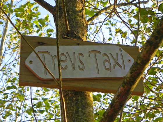 There's a line of trees sponsored by local businesses who support the @LEOPALLOOZA festival, like @trevplant taxis. :)
