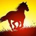 Twitter Bio - Callington Horse Show, Gymkhana & Family Dog Show will take place at Polhilsa Farm, Nr. Kelly Bray, Callington on Saturday 21st June 2014